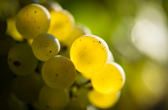 Les vinées Tonnerroises 2014