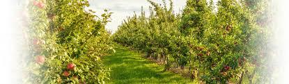 L'arboriculture de l'Yonne cherche ses soutiens
